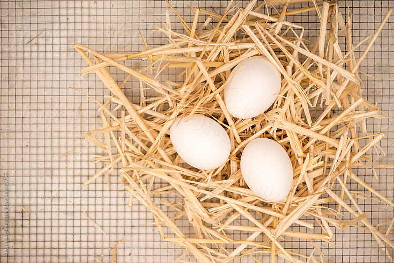 Eggs in hay nest on chicken wire by Rhonda Adkins for Stocksy United