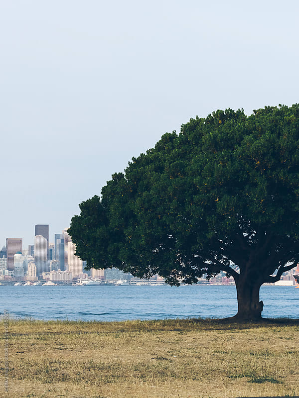 tree on the Alki Beach by unite images for Stocksy United
