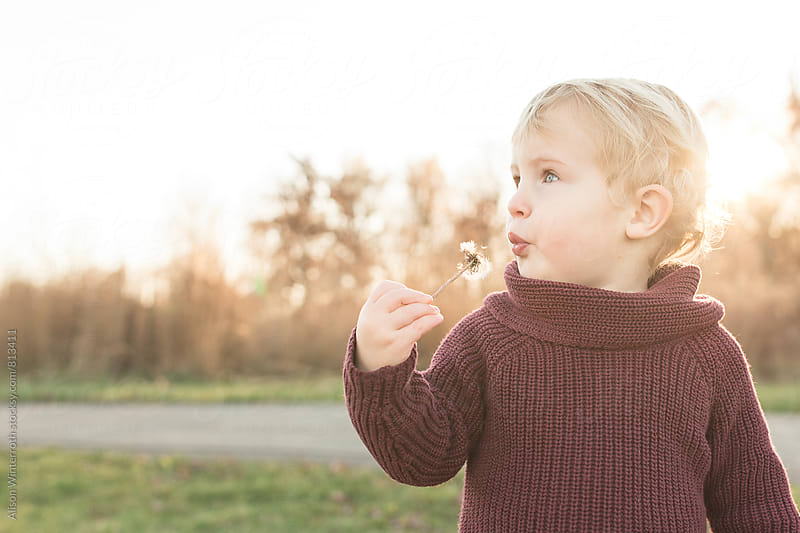 A Young Child Blows On A Dandelion  by Alison Winterroth for Stocksy United