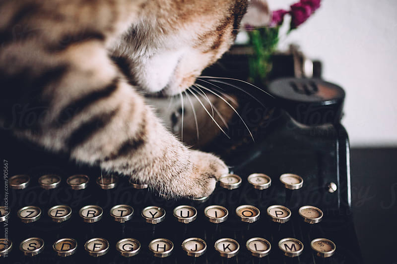 Cat playing with a typewriter by Thais Ramos Varela for Stocksy United