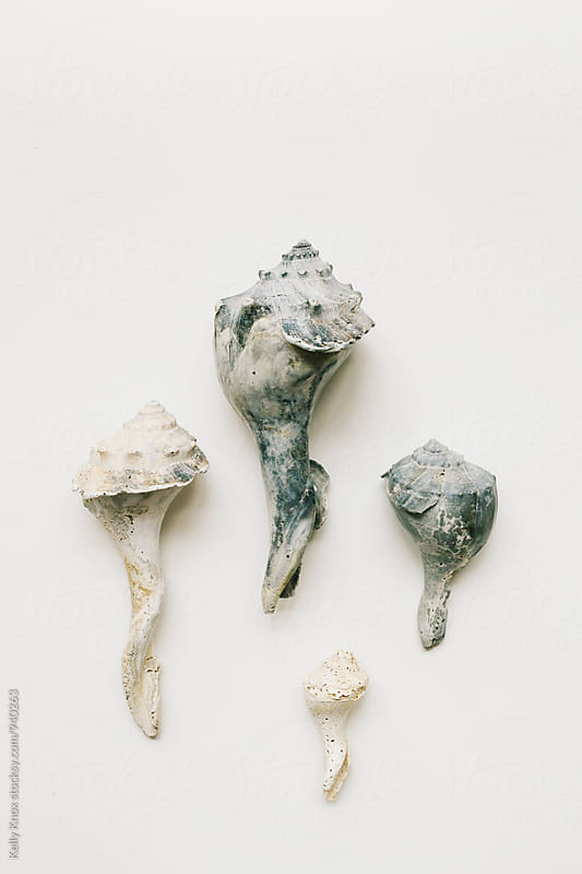 collection of weathered conch shells on white by Kelly Knox for Stocksy United