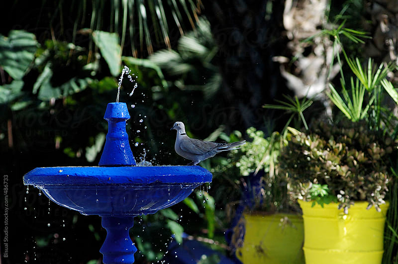 Bird resting in a blue fountain by Bisual Studio for Stocksy United