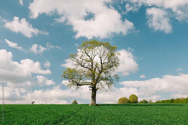 Tree in green field by Gabriel Tichy for Stocksy United