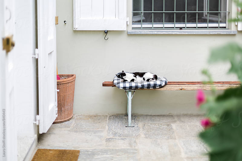 Cat sleeps on kennel on bench in sunny garden by Laura Stolfi for Stocksy United