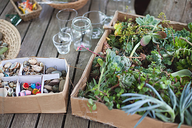 making terrariums at the local fete / market by Natalie JEFFCOTT for Stocksy United