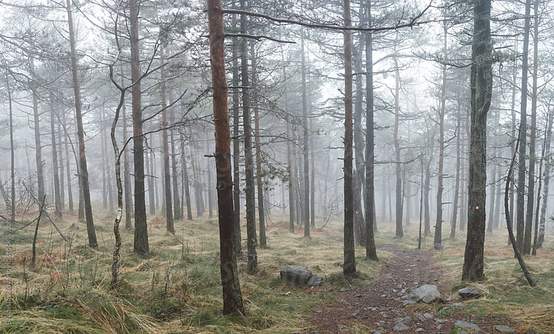 Foggy forest landscape by Brkati Krokodil for Stocksy United