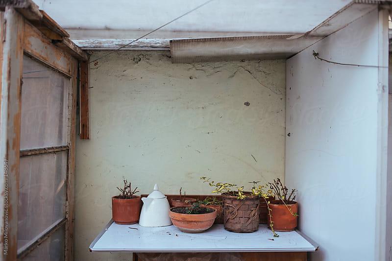 Plants in the pots by Marko Milovanović for Stocksy United