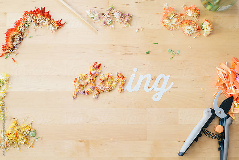 Flower petals in the process of being arranged to spell the word spring by Kathryn Swayze for Stocksy United