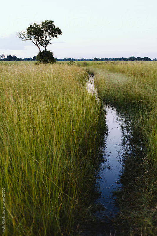 Path in the Okavango Delta by Holly Clark for Stocksy United