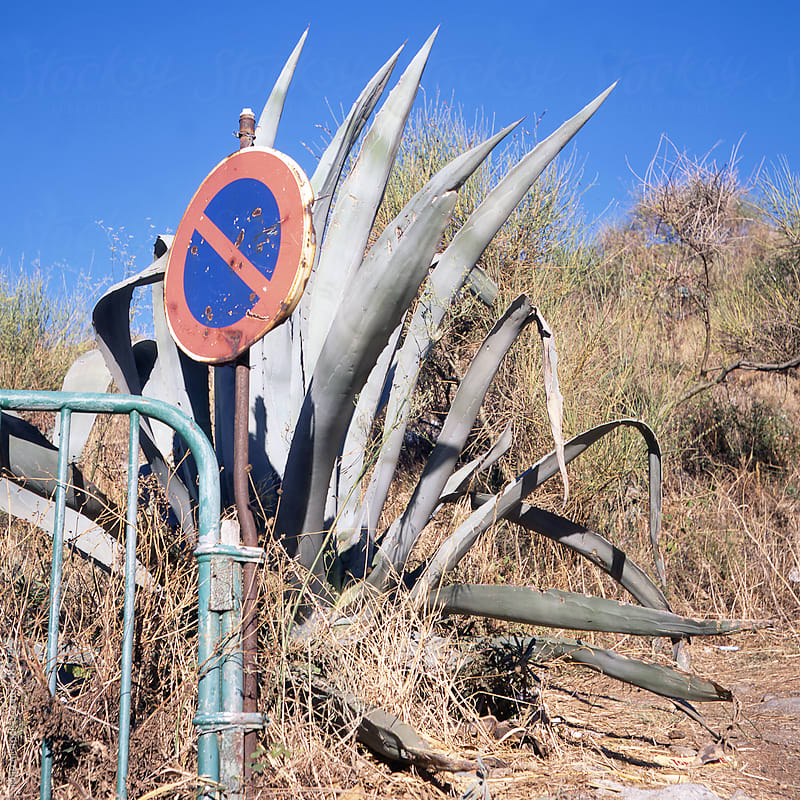 Giant agave americana on a roadside in France by Marcel for Stocksy United
