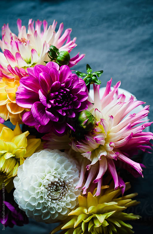 Brightly coloured Dahlias in a vase on a tablecloth by Suzi Marshall for Stocksy United