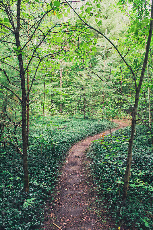 Forest Path by Jen Grantham for Stocksy United