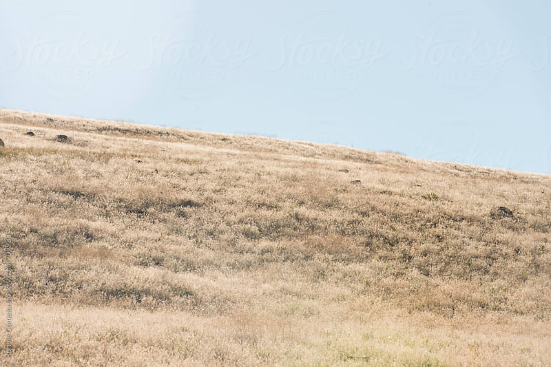 Golden Hill And Sky by Ronnie Comeau for Stocksy United
