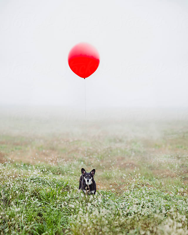 Little dog stands in foggy field with big red balloon floating above her as a leash by Laura Stolfi for Stocksy United