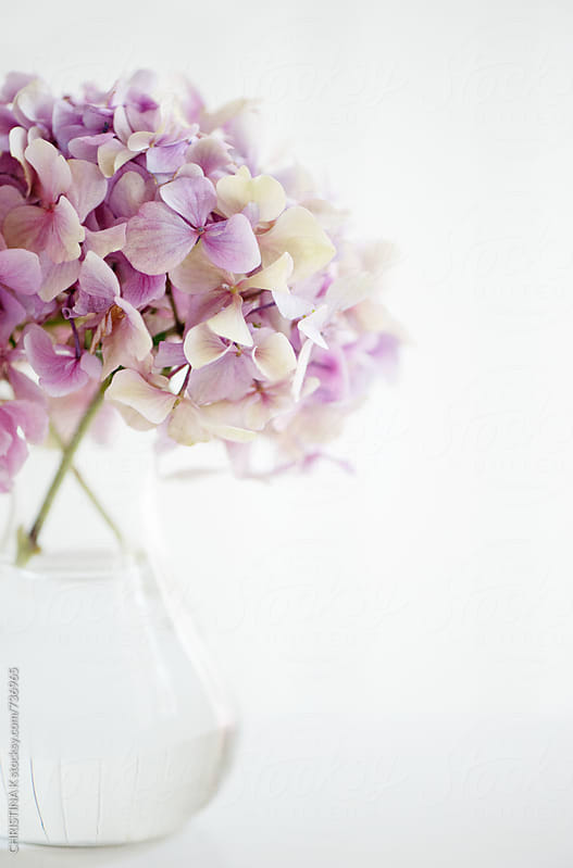 Vase of Hydrangeas by Christina Kilgour for Stocksy United