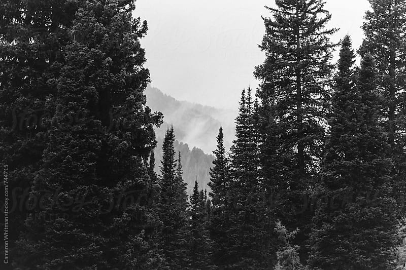 Misty Wasatch Mountains by Cameron Whitman for Stocksy United