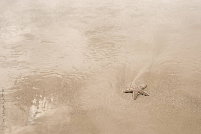 Sea Star by Courtney Rust for Stocksy United