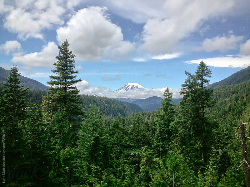 Panoramic View Of Mount Rainier Through Evergreen Forest by Luke Mattson for Stocksy United