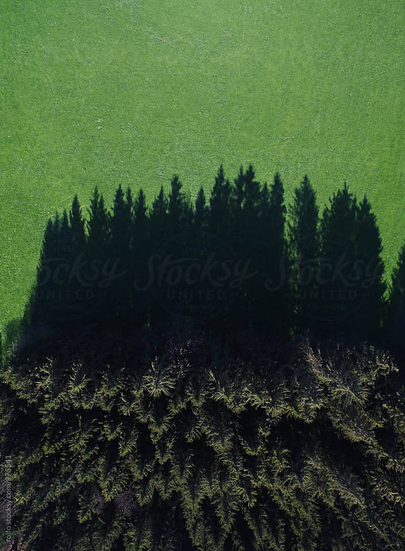 Amazing view on forest casting shadow on green grass by rolfo for Stocksy United