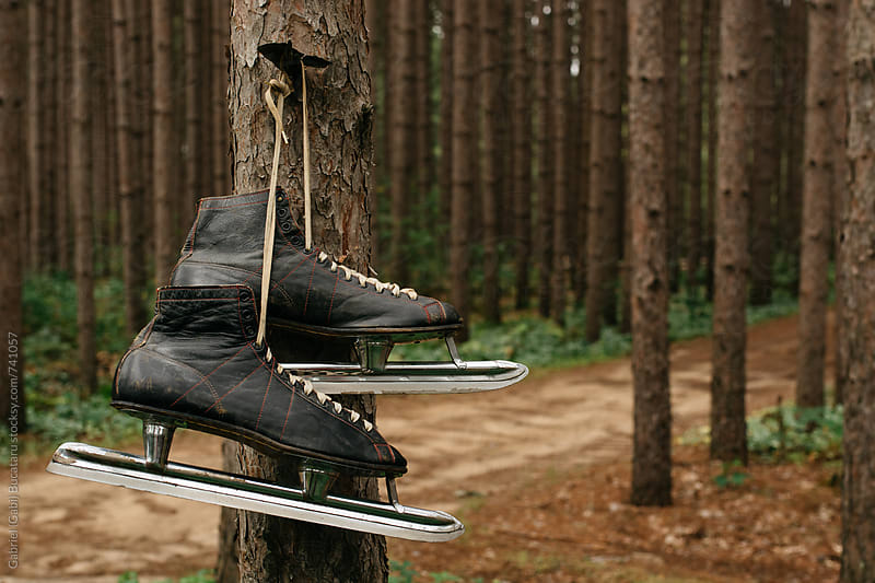 Black ice skates on a tree by Gabriel (Gabi) Bucataru for Stocksy United