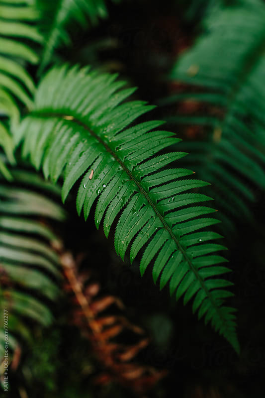 Green fern in the woods by KATIE + JOE for Stocksy United