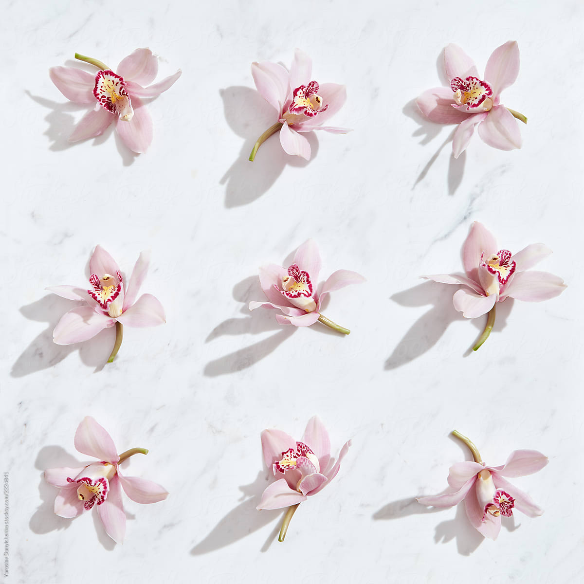 e84f38744191d Tender pink orchids flowers pattern on a gray marble background with shadows.  Top view.