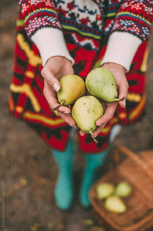Fruit Time. Fresh Pears  by Studio Firma for Stocksy United