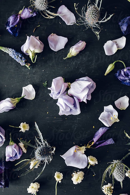 Purple Flowers & Petals by Hung Quach for Stocksy United