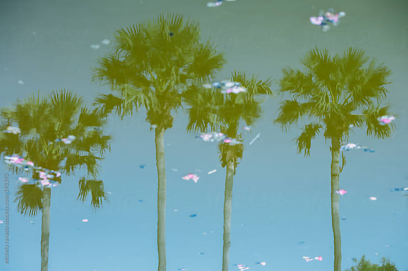 Palm trees reflected in a pond by michela ravasio for Stocksy United