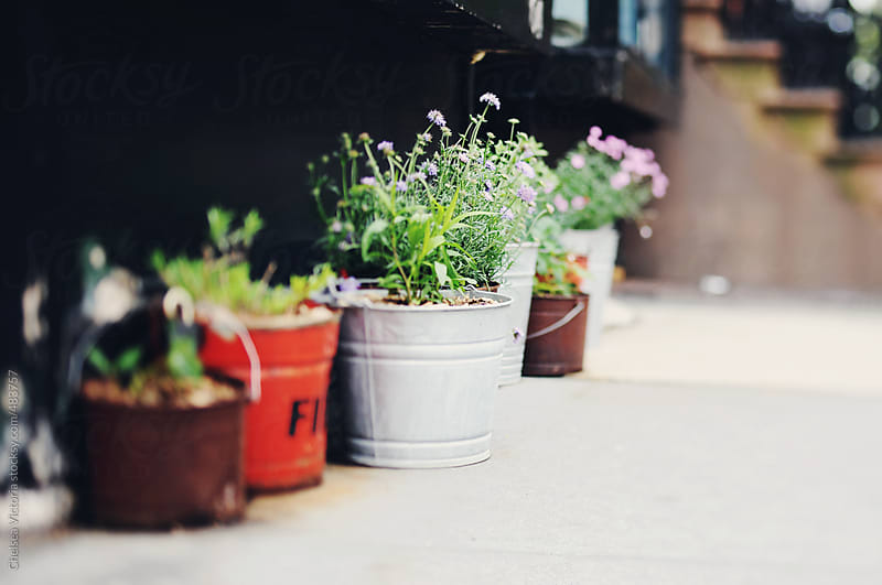Potted plants on a street in Manhattan by Chelsea Victoria for Stocksy United