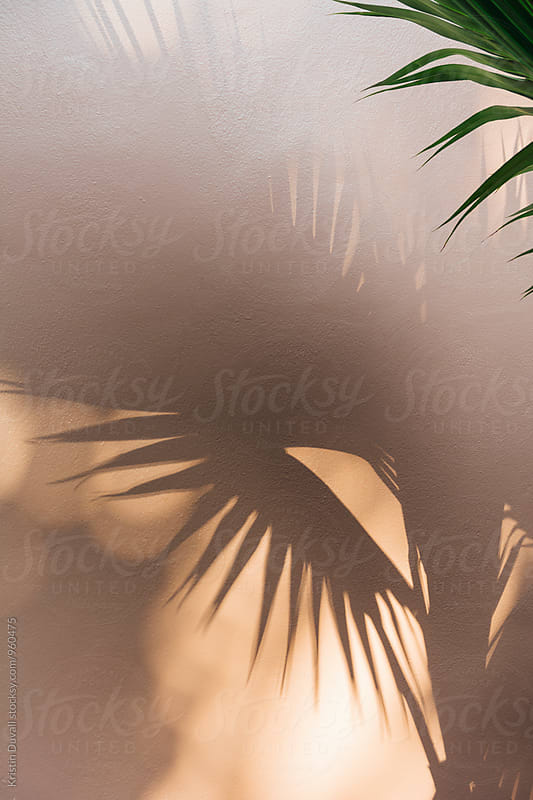 Palm tree with light and shadow by Kristin Duvall for Stocksy United