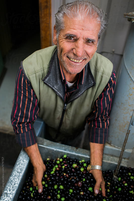 Olive grower at harvest by Robert Lang for Stocksy United