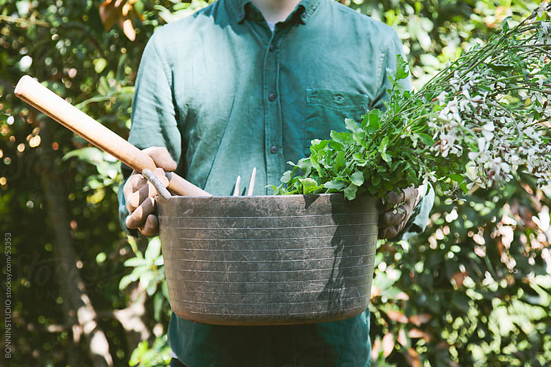 Young modern gardener man with fresh arugula on orchard. by BONNINSTUDIO for Stocksy United