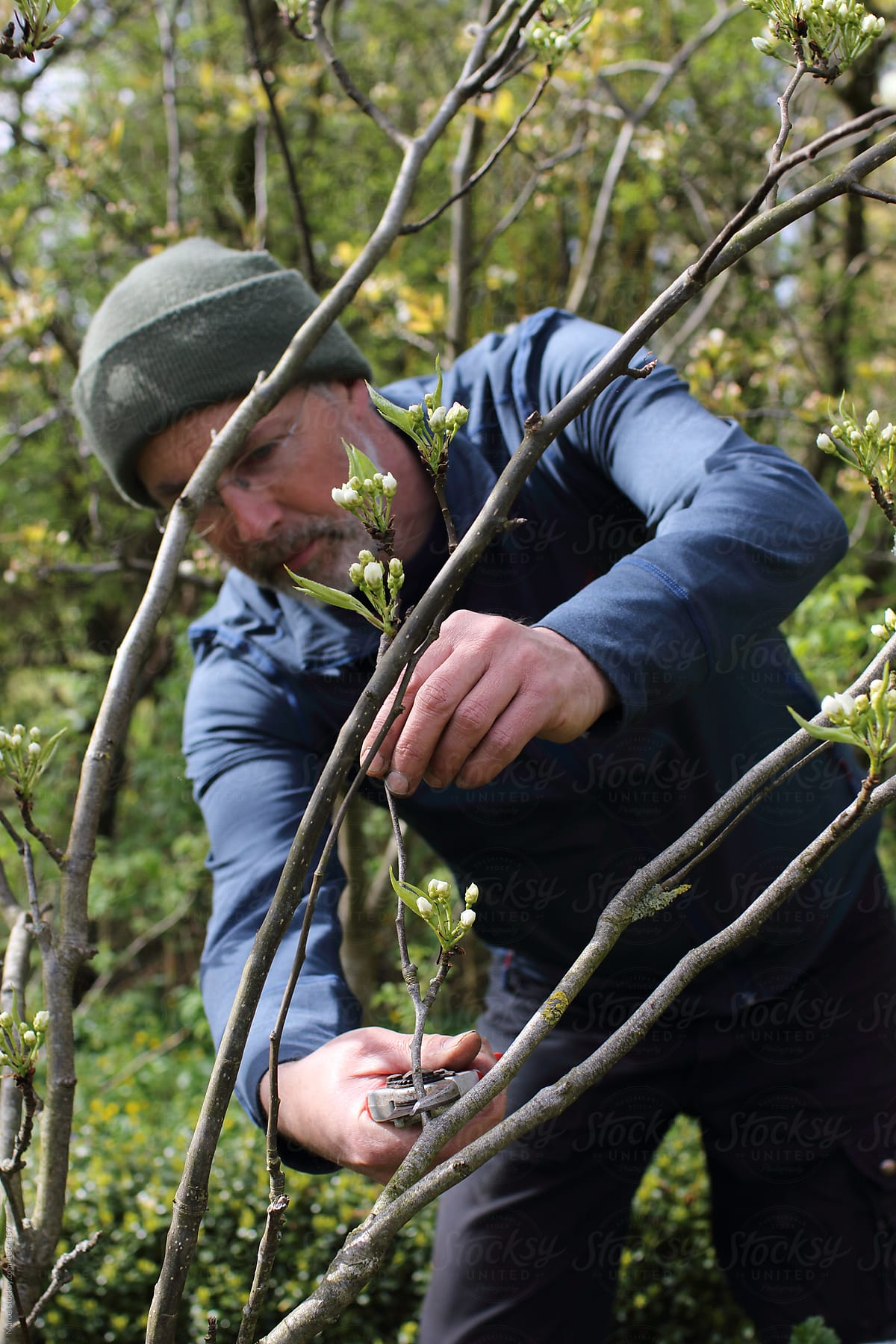 Man Cutting A Misplaced Branch In Fruit Tree By Marcel For Stocksy United