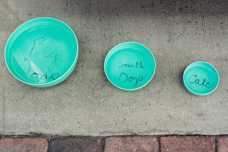 Various size water bowls for pets by Gabriel (Gabi) Bucataru for Stocksy United