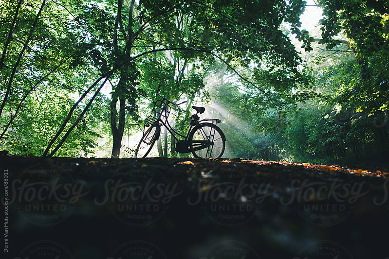 Silhouette of a bike parked in a forest by Denni Van Huis for Stocksy United