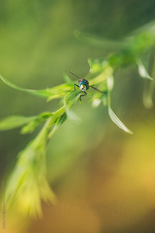 portrait of fly on the plant by Javier Pardina for Stocksy United