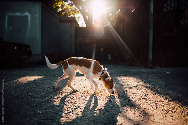 Portrait of dog lit by sun rays by Boris Jovanovic for Stocksy United