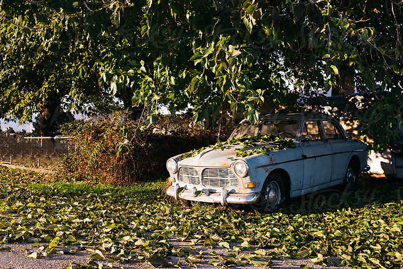 old car abandoned under tree with fallen leaves by Jesse Morrow for Stocksy United