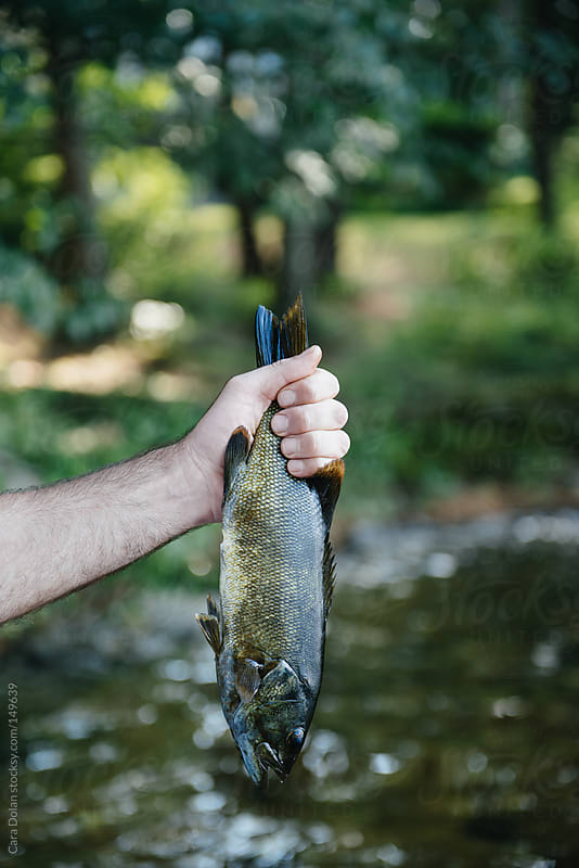 Man holds small mouth bass fish he's just caught by Cara Dolan for Stocksy United