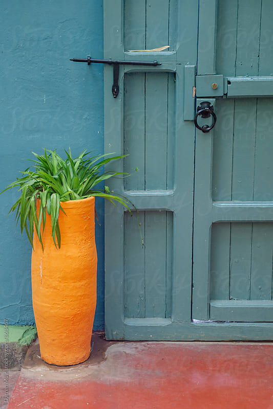 Terracotta planter with a spider plant against a green wall and door.  by Darren Muir for Stocksy United
