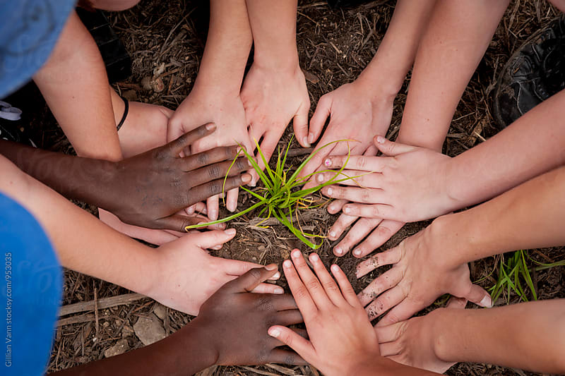 kids hands planting a small shrub or grass by Gillian Vann for Stocksy United