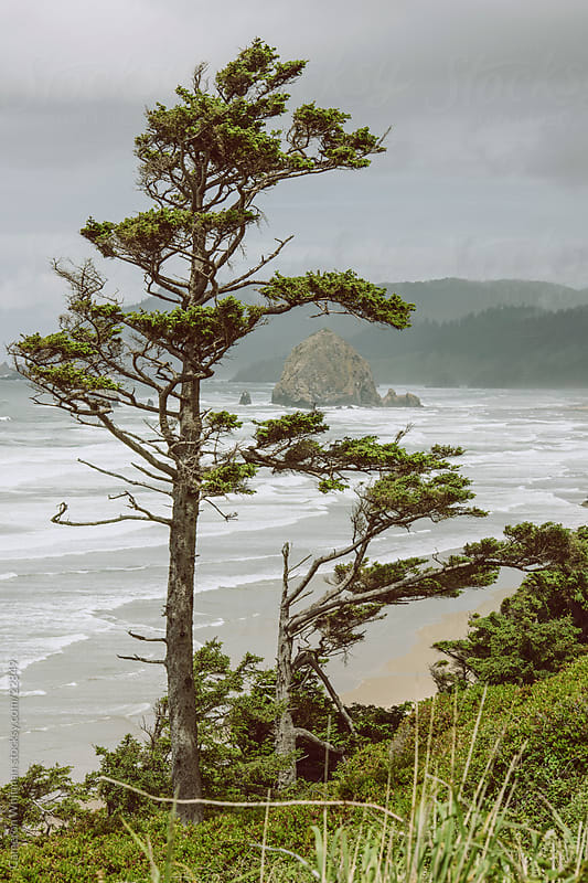 Tree Over Cannon Beach  by Cameron Whitman for Stocksy United