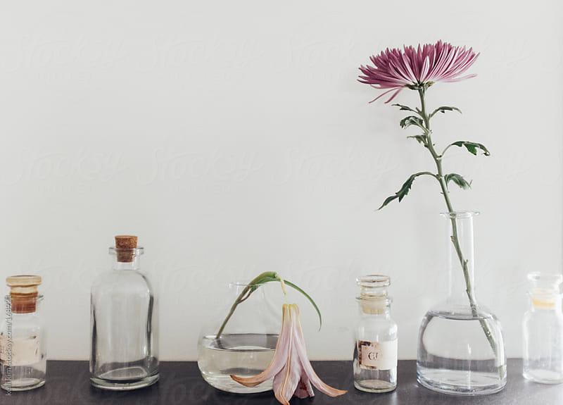 Flowers in various states of bloom in vintage bottles by Kelli Seeger Kim for Stocksy United