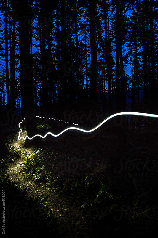 Trail Running at Night through a Rainforest by Carl Zoch for Stocksy United