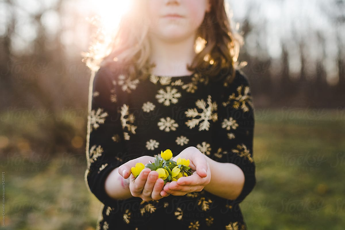 32e991f6ccb12 Stock Photo - Young Girl Holding A Bunch Of Small Yellow Flowers In Her  Hands