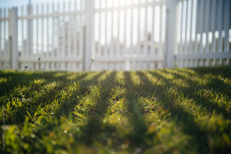 Sun shines through white picket fence, leaving shadows on the grass by Cara Dolan for Stocksy United