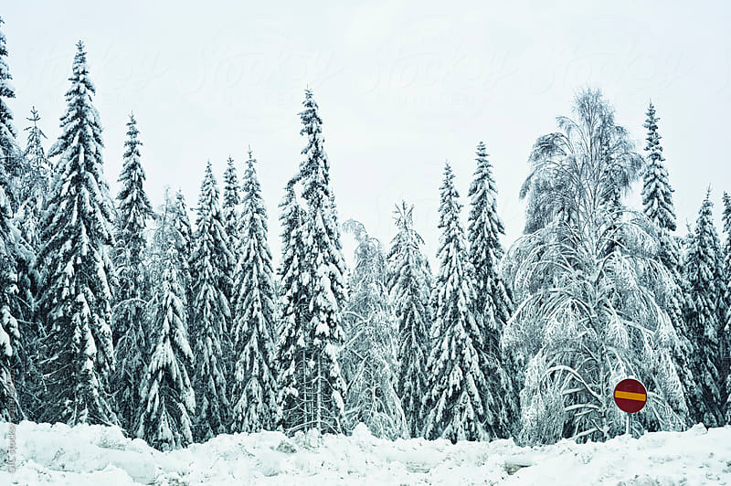Pine Trees with snow and red road sign by Simone Becchetti for Stocksy United