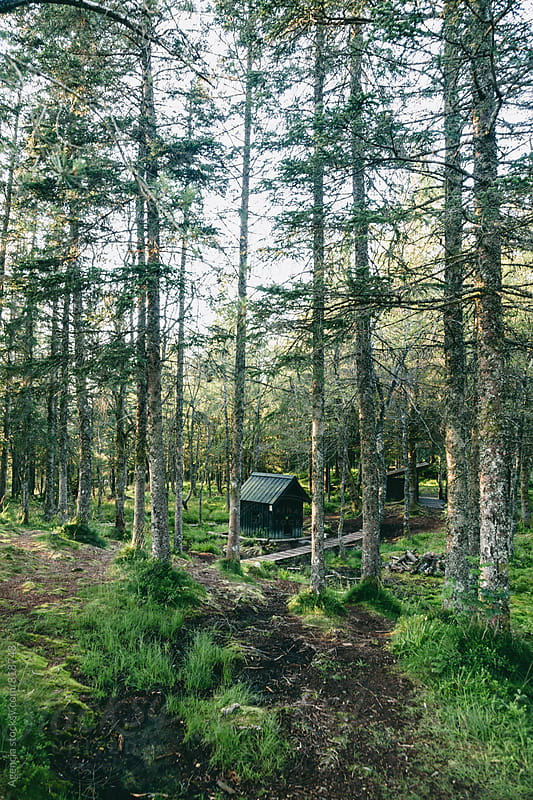 Forest Cabin by Agencia for Stocksy United