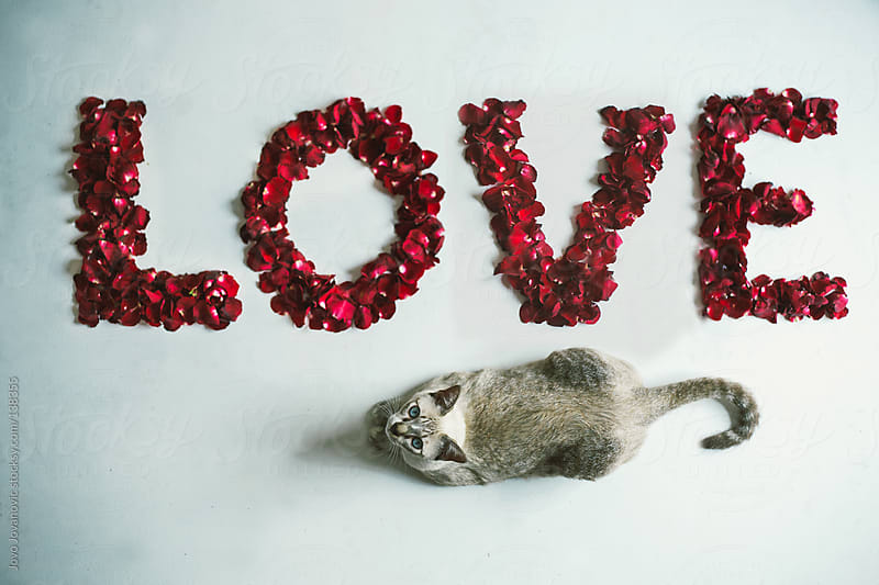 Cat sitting next to a love sign made of rose petals.  by Jovo Jovanovic for Stocksy United